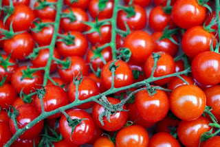 Gardener harvests 839 cherry tomatoes from a single stem