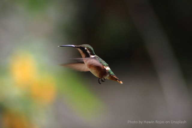 A oportunidade (de viver) é um beija-flor no pé de 'joão bolão'
