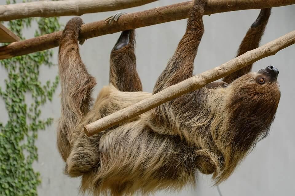 यह है दुनिया का सबसे सुस्त जानवर - Facts about The Slowest animal on earth