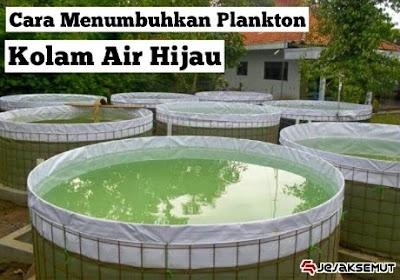 cara menumbuhkan plankton