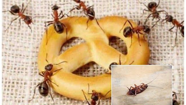 طرق التخلص من النمل طبيعيا