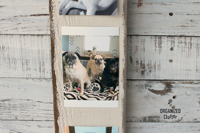Easy & Inexpensive DIY Gift Idea For A Dog Lover #photodisplay #hobbylobby #fusionmineralpaint #stencil