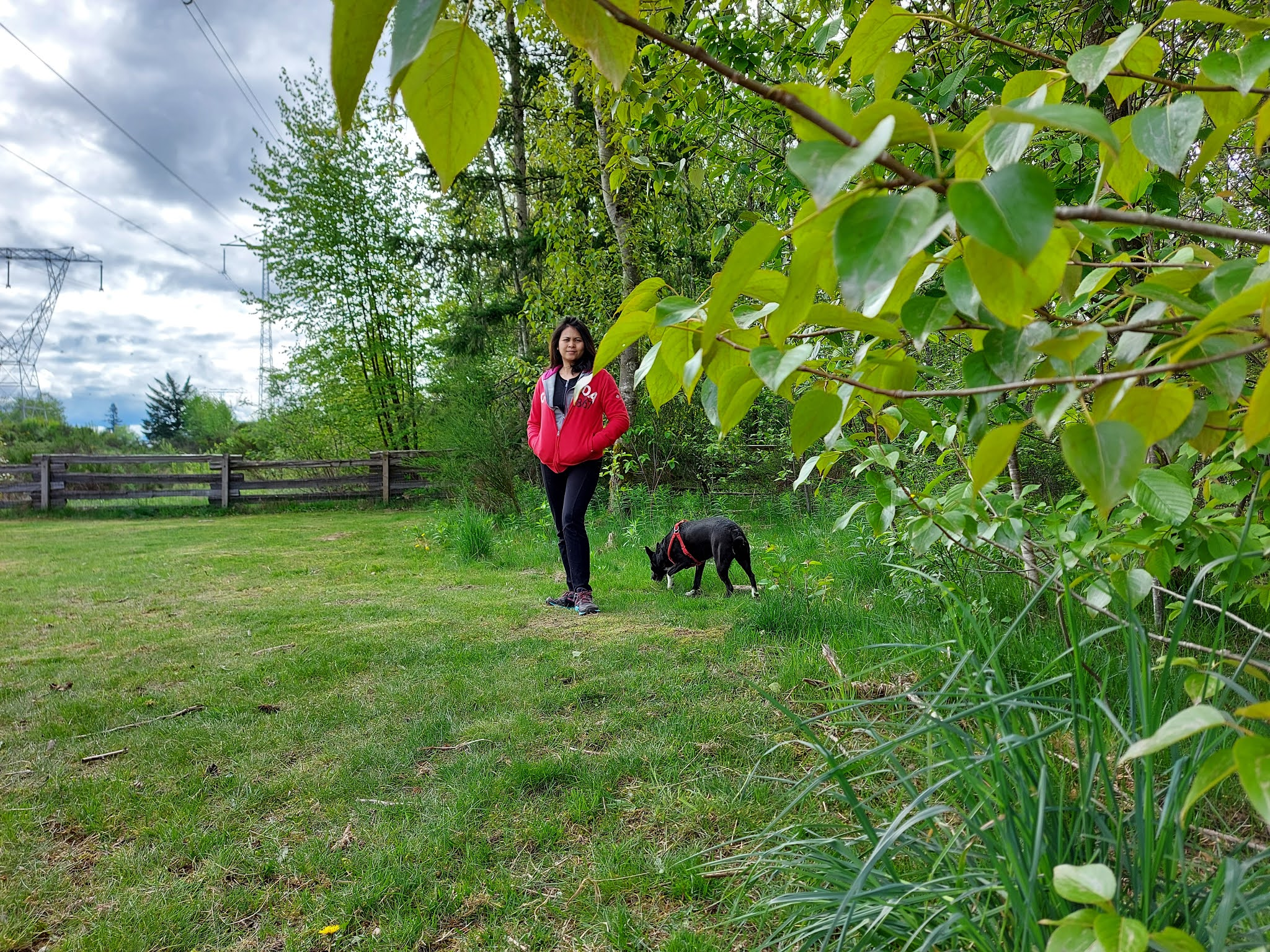At the clearbrook dogs park