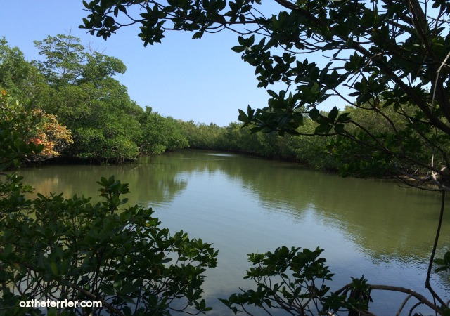 The Oleta River in Oleta River State Park, Miami, Florida