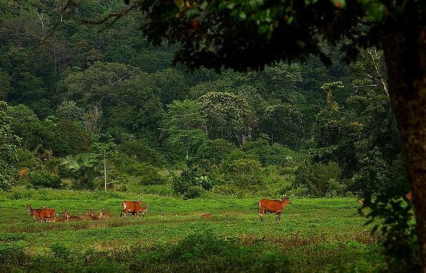 Pesugihan Alas Purwo Jawa Timur