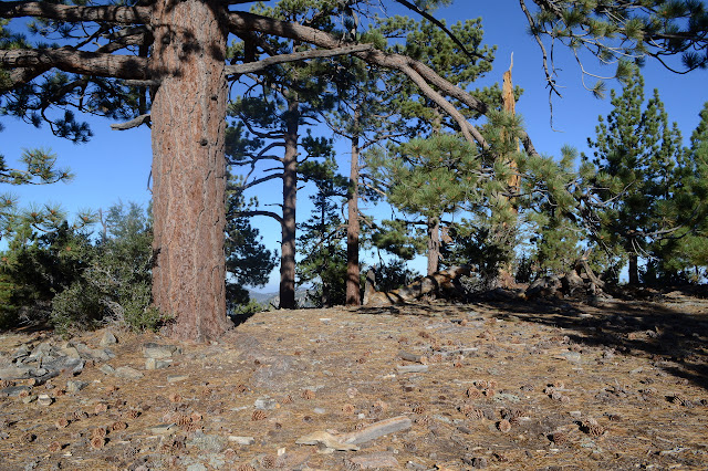 flat top with a big tree