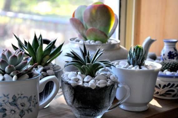 Quer plantar cactos e suculentas, mas não se desapega da ideia de não ter espaço em casa? Então, seus problemas acabaram! Veja que em qualquer objeto, por menor que seja, você pode sim montar um belo mini jardim.  Para início de conversa, não tenha medo de misturar cactos e suculentas, além de pertencerem a mesma família de plantas, elas compartilham também da pouca exigência de água e da mesma quantidade de Sol para a sobrevivência.  Escolha locais próximos às janelas para manter seus cactos e suculentas, o Sol é indispensável para elas se mantenhas vivas e saudáveis.