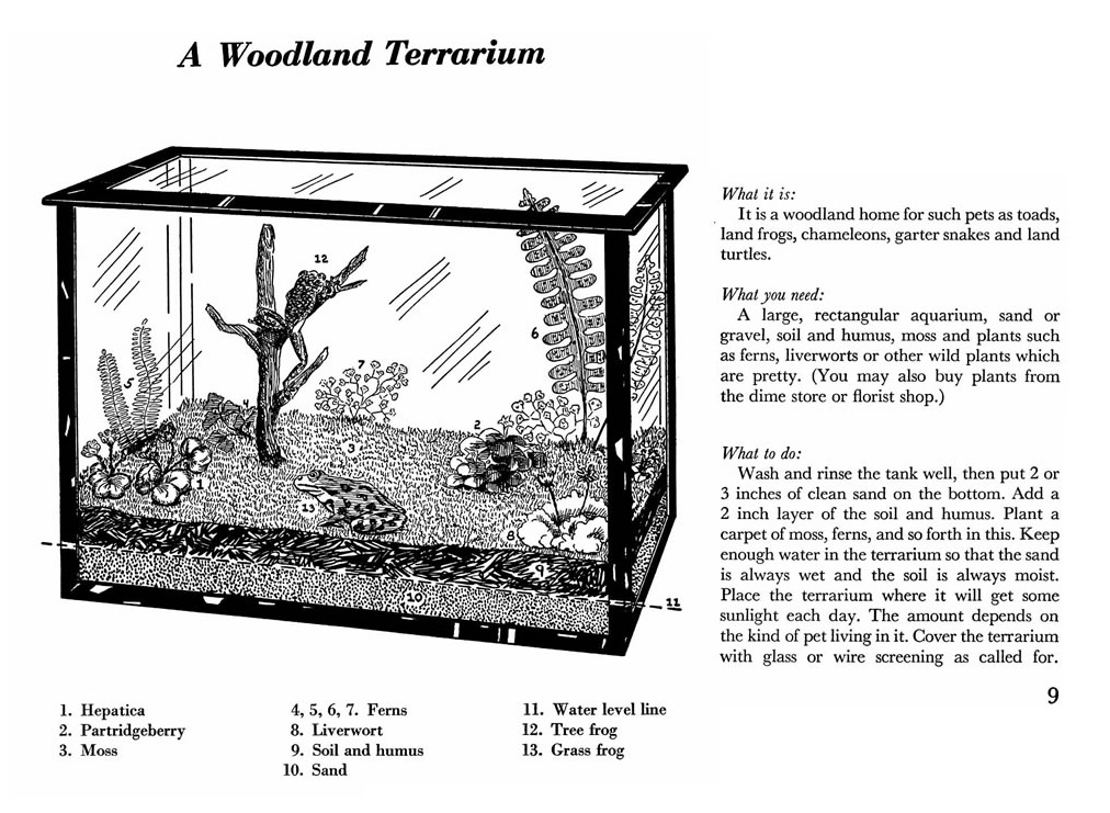 outlaw@home: Terrarium How-To