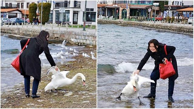 Ради селфи-фото девушка вытащила из озера лебедя. Последствия были ужасны
