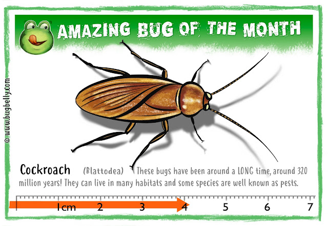 Graphic illustration of Cockroach. On Bug Belly frog website