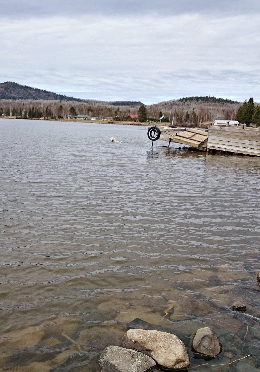 Komondor in Lake Superior