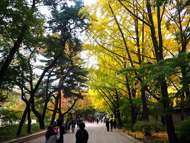 Autumn leaves in Seoul, South Korea