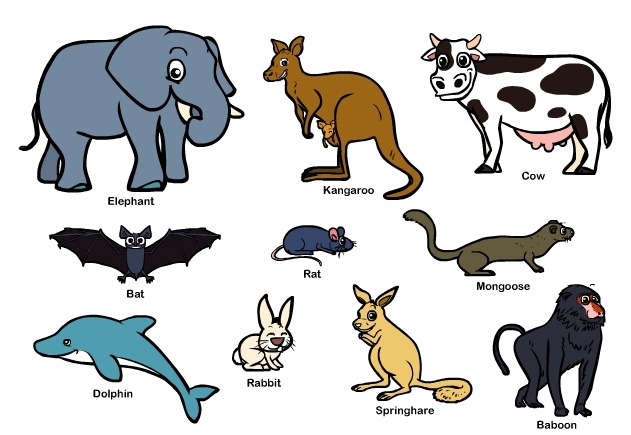Mammal Group 121