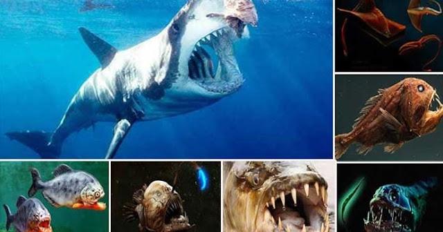 Ikan Terbuas di Dunia
