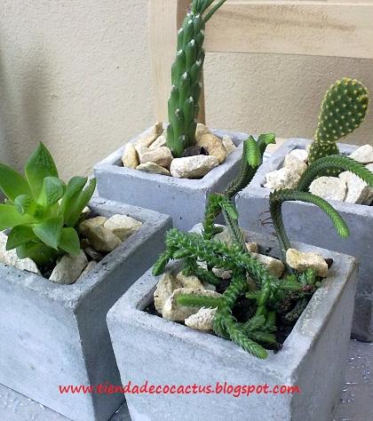 Cactus en macetas de microcemento tienda deco c - Cactus en macetas pequenas ...