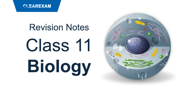 Class 11 Biology Revision Notes