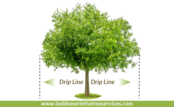 Tree canopy and drip line Marietta Ga