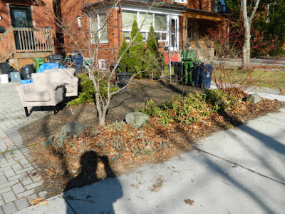 Bloor West Village Toronto Front Yard Spring Cleanup Before by Paul Jung Gardening Services--a Toronto Gardening Company