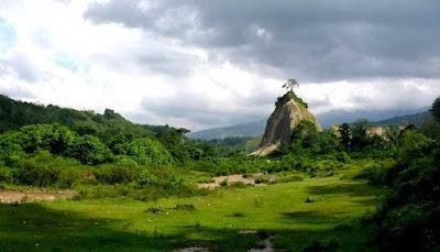 Pohon Ujung Tebing
