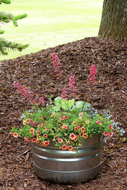 Galvanized Tub Container Garden in a mulch garden