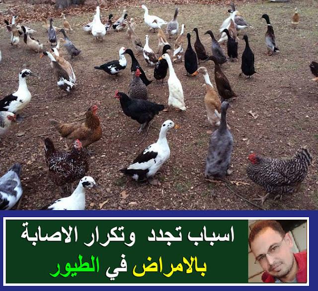 امراض الطيور/اسباب موت الطيور/تربية الطيور/امراض الطيور المتكررة