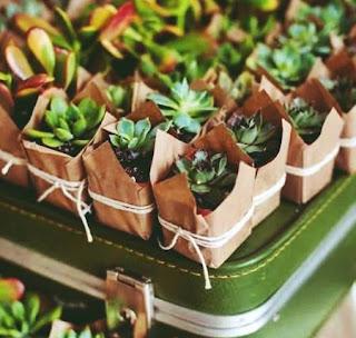 souvenir pernikahan kaktus mini