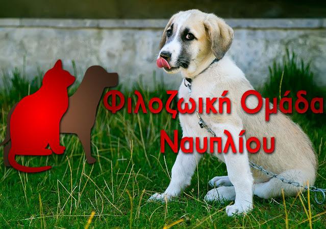 Φιλοζωική Ομάδα Ναυπλίου: Ο Δήμος να αναλάβει την ευθύνη των αδέσποτων ζώων για όλη την διάρκεια της καραντίνας