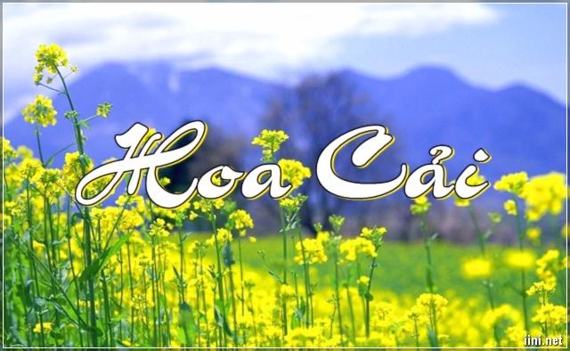 Chùm Thơ tình Hoa Cải Vàng bên sông & mùa Đông yêu thương