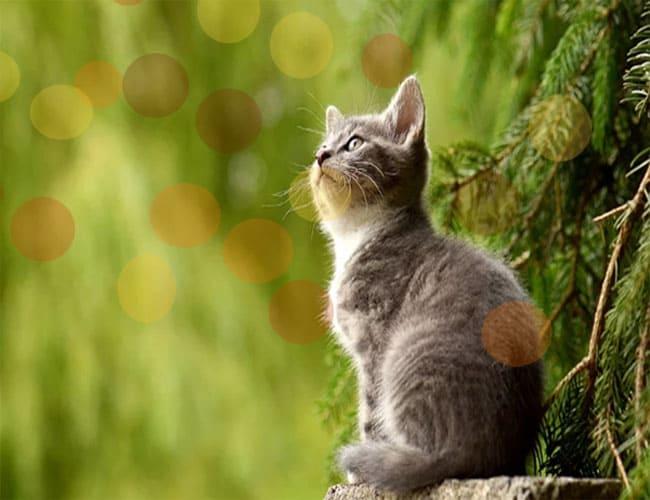 Cara Menggunting Kuku Kucing yang Benar PIXABAY