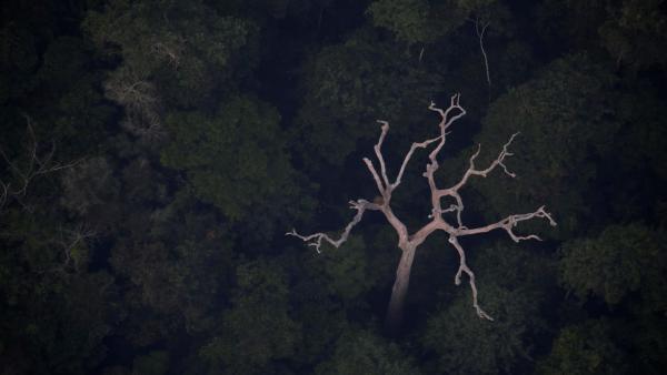 Soberania da Amazônia é raro ponto de convergência entre esquerda e direita
