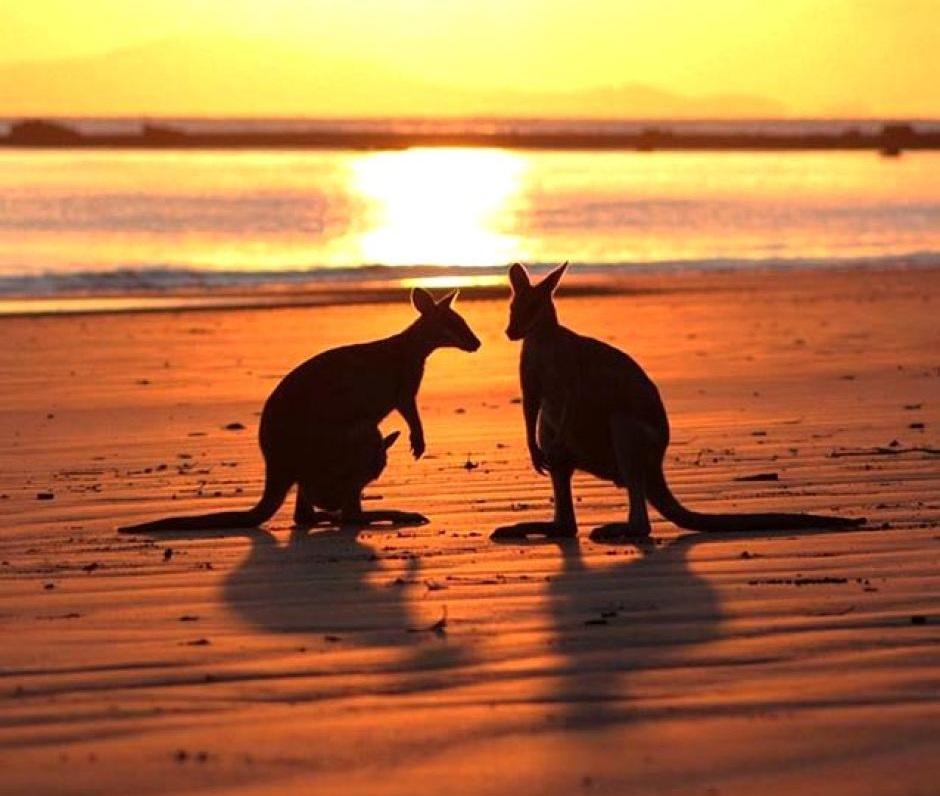 Cape Hillsborough National Park Queensland Australia