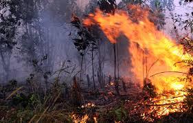Kebakaran Hutan dan Lahan Mulai Terjadi Didaerah Sumsel