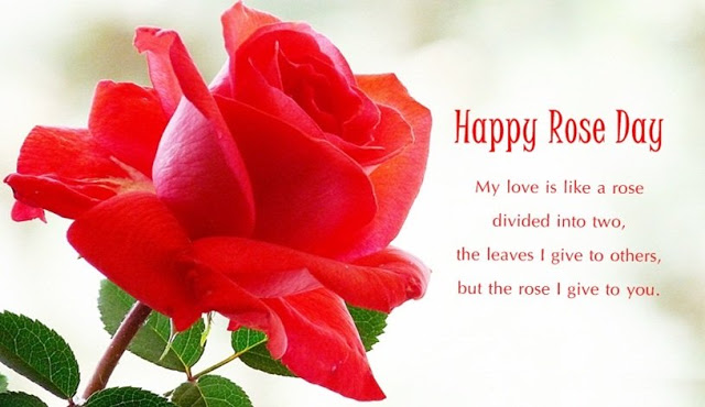 images for rose day 2019