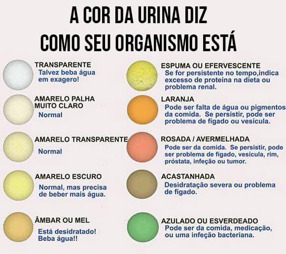 infografico-cor-urina