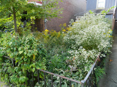 Little Italy Fall Front Garden Cleanup Before by Paul Jung Gardening Services--a Toronto Gardening Services Company