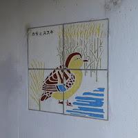 打上川治水緑地・カモとススキ