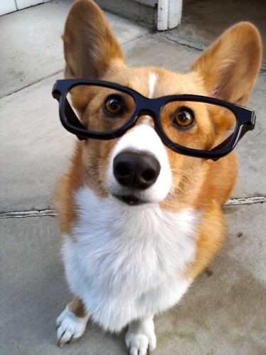Smart Dog with Eyeglass, its funny and cute