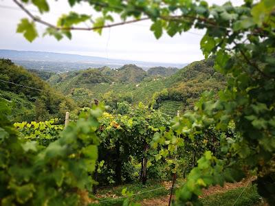 vigne rive prosecco