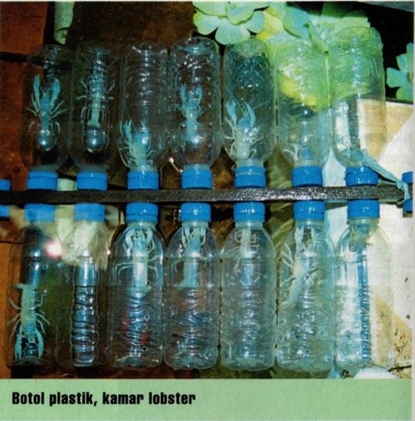 Budidaya Lobster Di Lahan Sempit Dengan Botol Air Mineral Bekas
