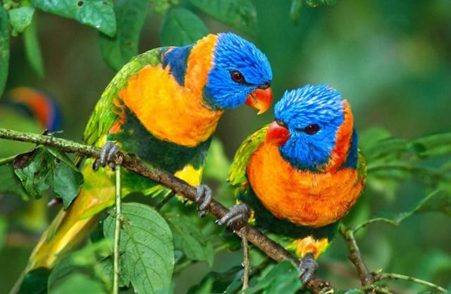 Harga Burung Nuri