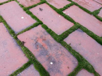 Detalle de musgo entre las baldosas de la terraza de una casa en Barxeta