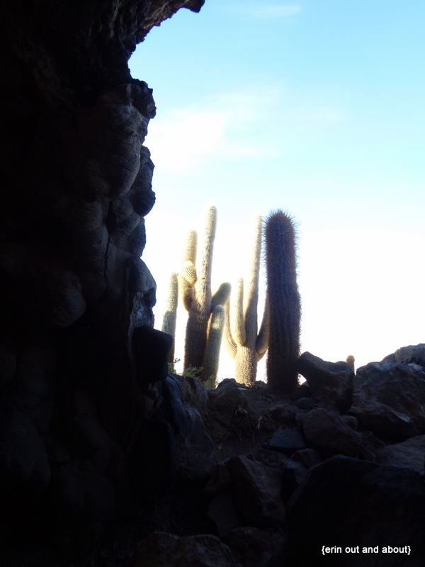 {ErinOutandAbout} Isla Incahuasi