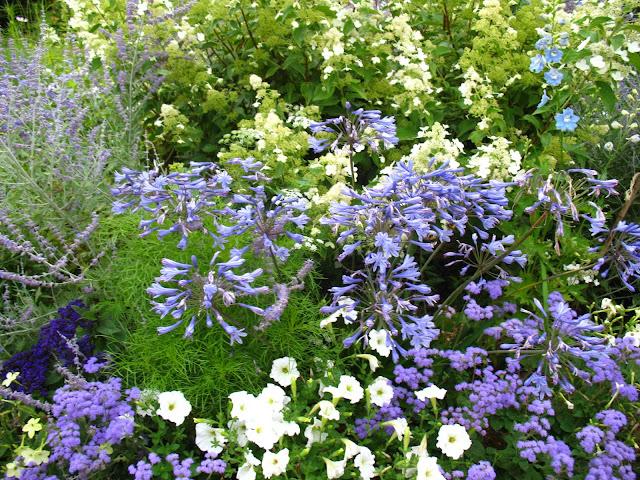 roses du jardin ch neland un cama eu de fleurs bleues. Black Bedroom Furniture Sets. Home Design Ideas