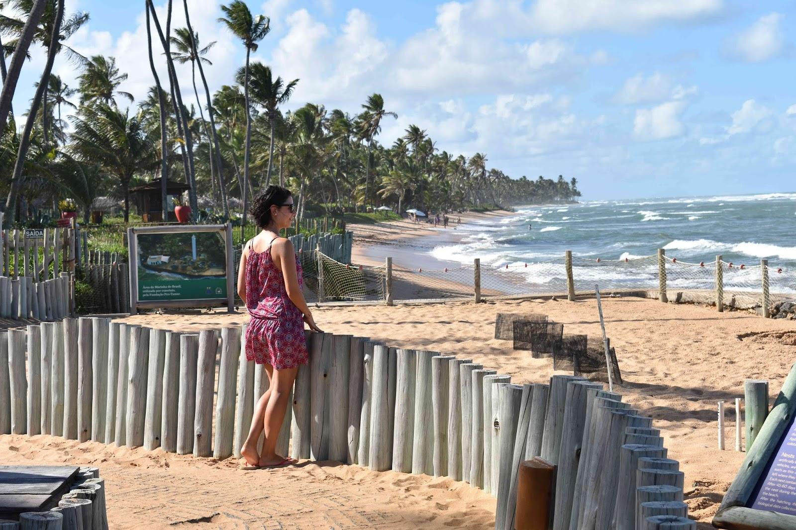 O que fazer na Praia do Forte - Projeto Tamar