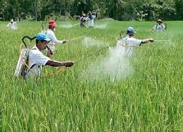 Pengertian Pestisida dan Macam-Macam Pestisida, Kegunaan serta Dampaknya bagi Kehidupan