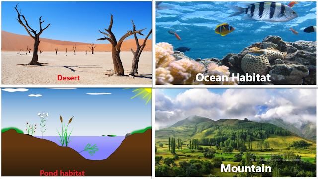 Terrestrial and Aquatic Habitats, desert habitat, pond habitat, ocean habitat, grassland habitat, mountain habitat, The living organisms and their surroundings, NCERT class 6, chapter 9, NCERT class 6th Science Solutions