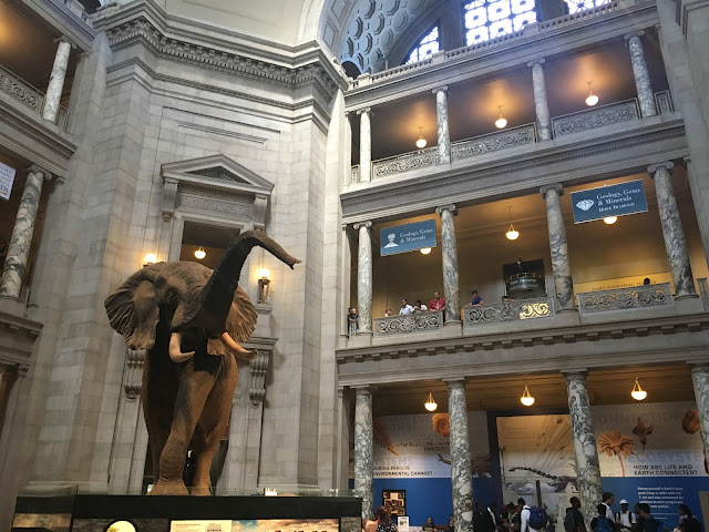 Smithsonian Museum of Natural History D.C.