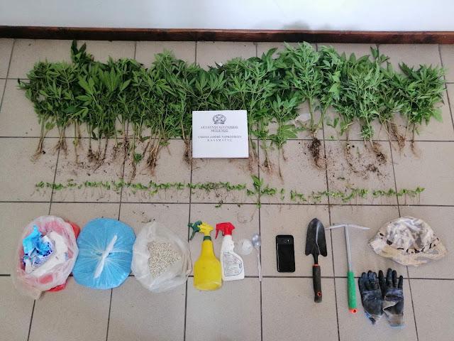 Εντοπίστηκε φυτεία με 174 δενδρύλλια κάνναβης στη Μεσσηνία