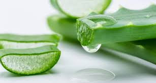 How to treat sinusitis with Aloe vera