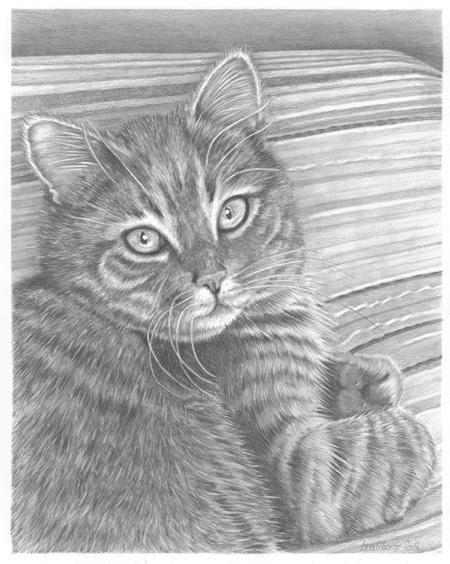 Wildlife & Pet Fine Art Sketchbook by Tara Tiberio: GiGi ...